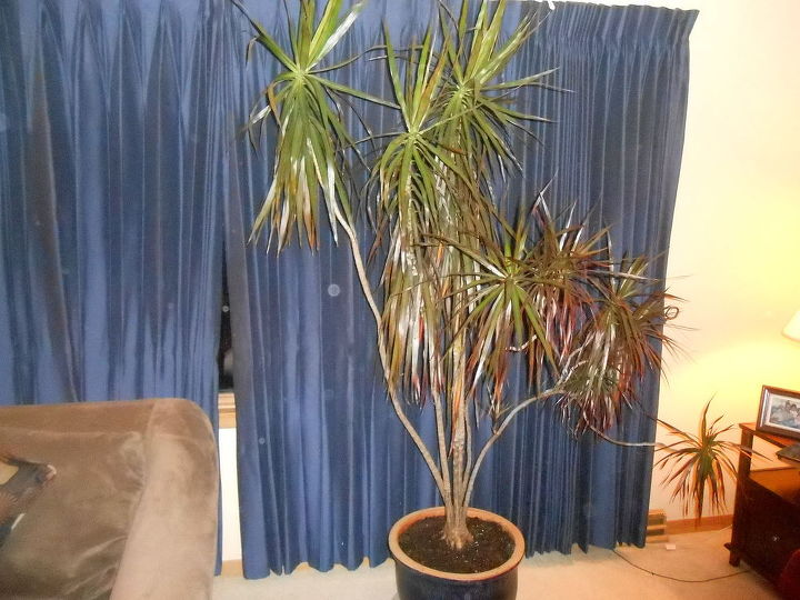 gardening tips houseplants inside bug free, container gardening, gardening, outdoor living, pest control