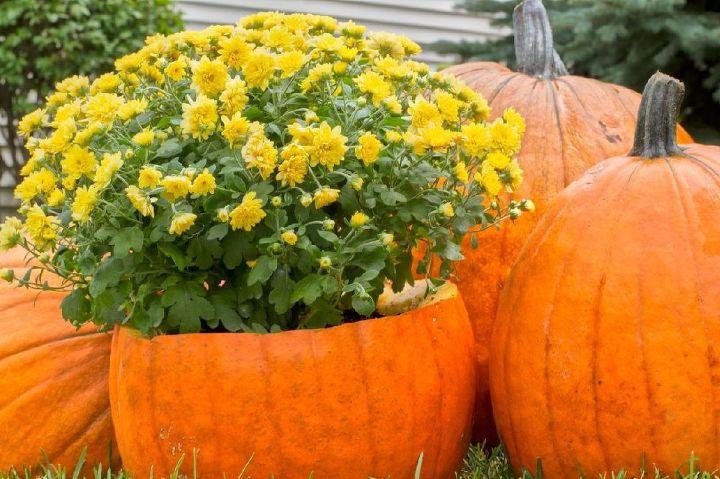 halloween decorations pumpkin ideas, halloween decorations, seasonal holiday decor