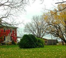 home improvement vine removal tips, concrete masonry, gardening