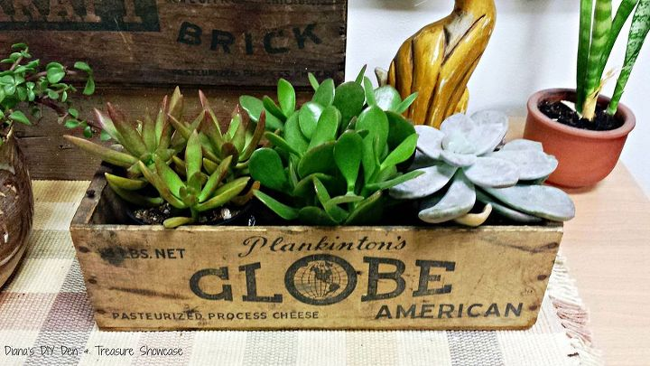 succulents planters vintage cheese box, gardening, repurposing upcycling, succulents