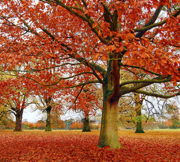 leaf removal tips fall cleanup, bathroom ideas, cleaning tips, closet, concrete masonry