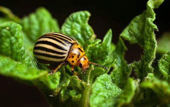 15 Common Garden Pests and Organic Ways To Control Them