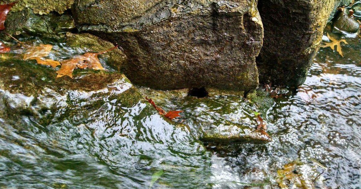 Backyard koi pond tricks and tips for fall hometalk for Koi pond forum