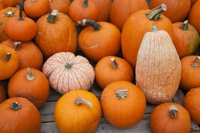 things to do with your old pumpkin, gardening, halloween decorations
