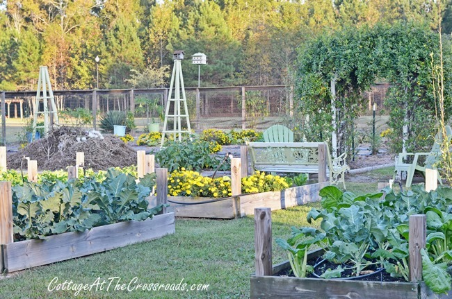 Fall Vegetable Garden Ideas   Hometalk