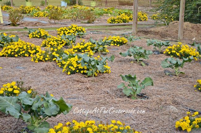 fall vegetable garden ideas gardening raised garden beds