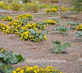 Fall Vegetable Garden Ideas, Gardening, Raised Garden Beds