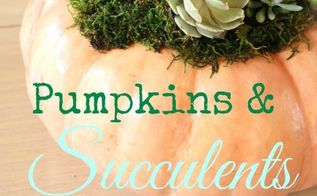 how to plant succulent plants on top of pumpkins not in them, container gardening, flowers, gardening, how to, succulents