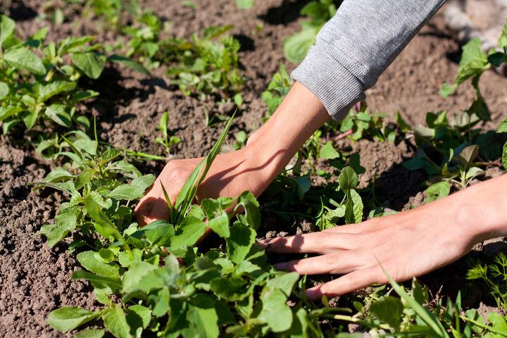 natural ways to remove weeds, gardening