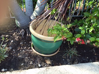 q pots too large for plants collecting rainwater, container gardening, gardening, too large to fill with soil too heavy to move they re a burden and a waste