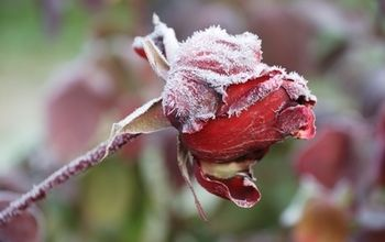 Put A Glove On Your Green Thumb & Winterize Your Garden