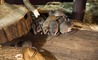think you may have mice or rats living in your house, pest control