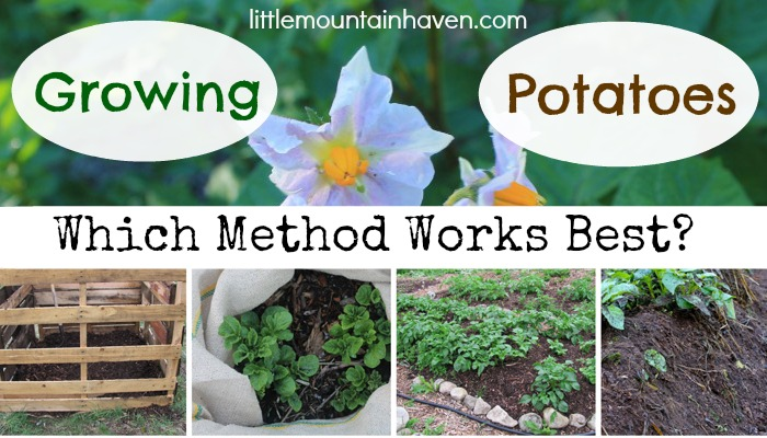 growing potatoes methods, gardening