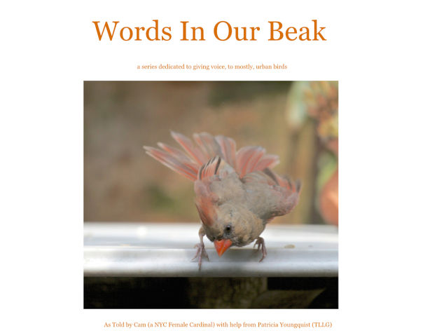 Birds And Their Meanings Whats Your Thought Hometalk