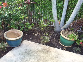 huge heavy planters craft ideas, gardening, 2 somewhat attractive but heavy and big as hell plant pots that I can t move have become a burden