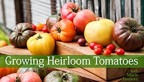 a helpful guide on types of tomatoes to grow, gardening
