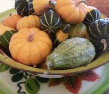 garden bounty at peace plenty farm, gardening, seasonal holiday decor, thanksgiving decorations