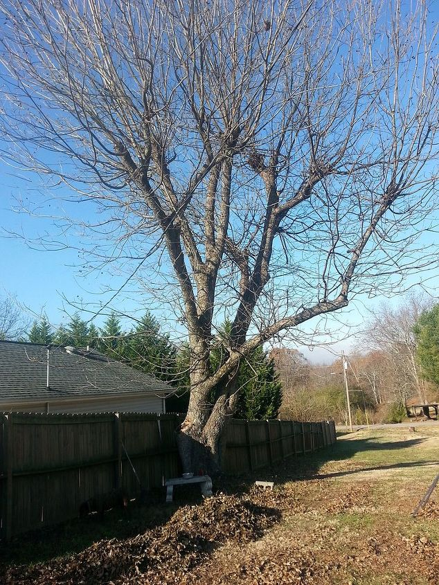 q how do i bring back this pecan tree to it s full potential, gardening, landscape, outdoor living