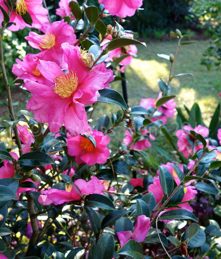 florida bloom filled christmas, flowers, gardening