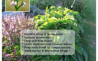9 strategies to help combat common edible garden problems, composting, container gardening, gardening, homesteading, pest control, Comfrey grows easily from seed root cuttings