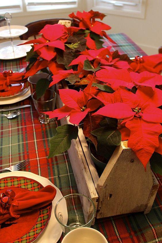 how to care for poinsettias, flowers, gardening, home decor