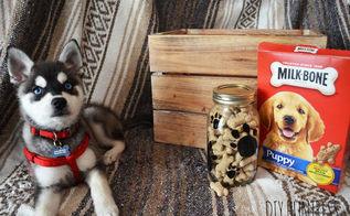 diy dog treat jar a container store knockoff, crafts, mason jars, pets animals, repurposing upcycling, storage ideas
