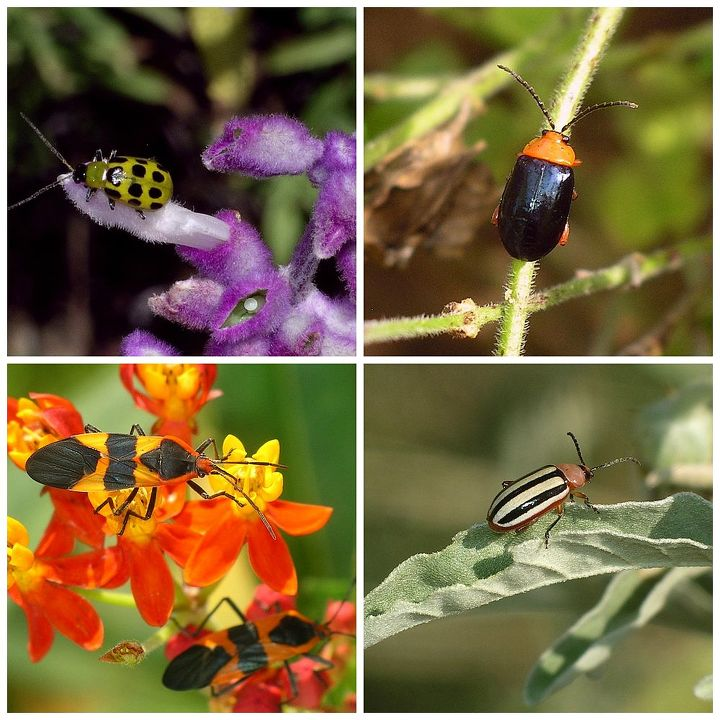native plants and insects a vital connection, gardening