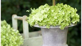 q ideas to make a flower arrangement in an urn, container gardening, flowers, gardening, home decor