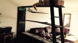 Bugs In Reclaimed Wood Hometalk