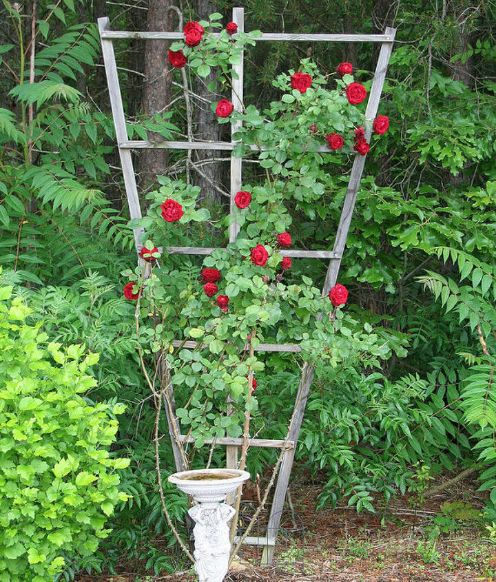 how to build a trellis for climbing roses, flowers, gardening, how to