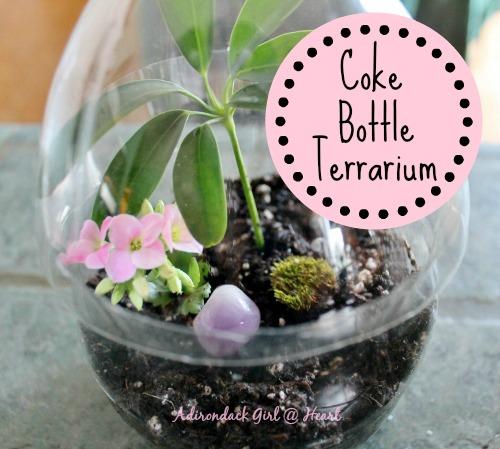 coke bottle terrarium, gardening, home decor, repurposing upcycling, terrarium