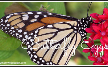 do you know how to spot butterfly eggs, gardening, pets animals
