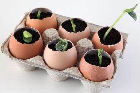 10 great gardening hacks tips, gardening