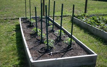 How to Plan a Raised Bed Vegetable Garden
