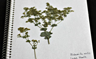 diy herbarium, crafts, flowers, gardening
