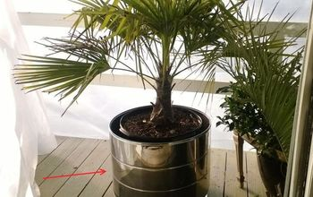 Craigslist Washing Machine to Potted Palm