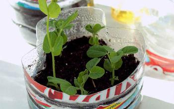 Start Your Garden in a Water Bottle Greenhouse