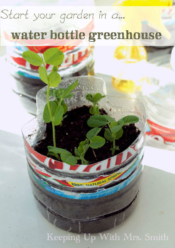 start your garden in a water bottle greenhouse, container gardening, gardening, repurposing upcycling