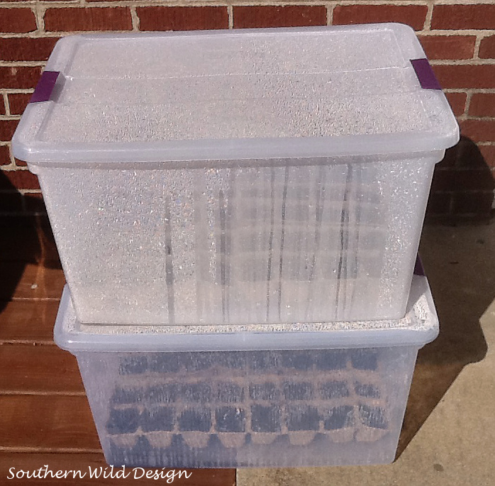 Seed Starting Using Mini Greenhouses Container Gardening How To