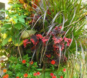 My Container Gardening, Container Gardening, Flowers, Gardening, Hydrangea,  Summer To Fall