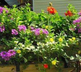 My Container Gardening, Container Gardening, Flowers, Gardening, Hydrangea,  Sunny Window Box