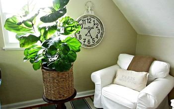 How Care for a Fiddle Leaf Fig