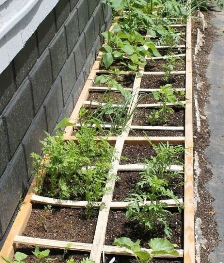 how to eliminate garden slugs, gardening, homesteading, how to, pest control, raised garden beds