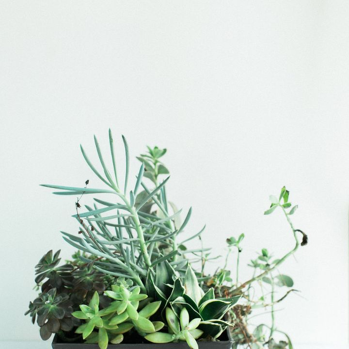 create a succulent sconce, container gardening, gardening, home decor, succulents