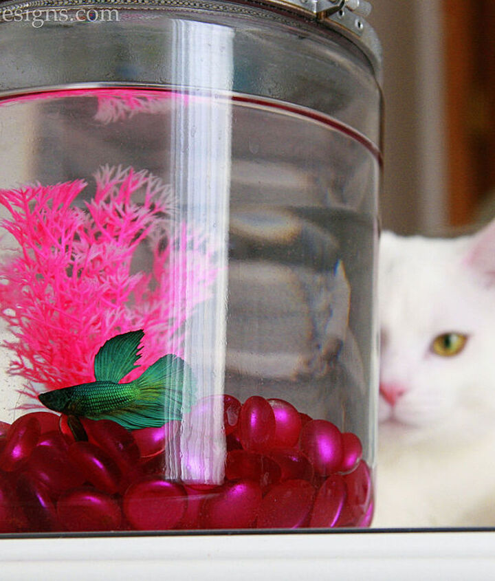 fish bowl cover, crafts, how to, pets animals, repurposing upcycling