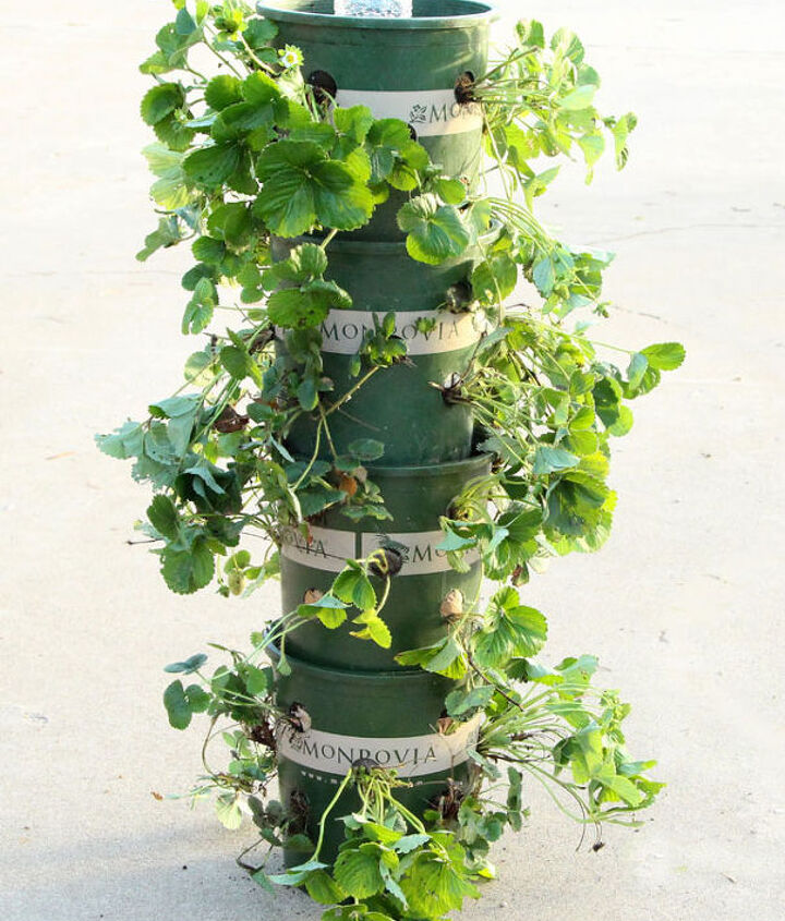 diy strawberry tower with built in reservoir, container gardening, gardening, homesteading, how to, repurposing upcycling