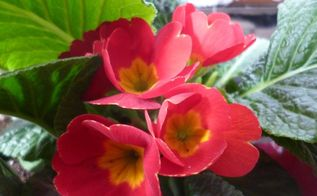 spring gardening ideas tips from the experts, gardening, how to