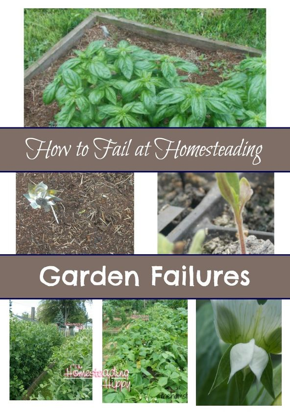 gardening failures you can learn from, container gardening, gardening, homesteading