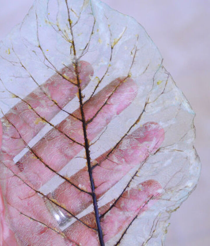 color tinted skeleton leaves, crafts, how to, repurposing upcycling, wall decor