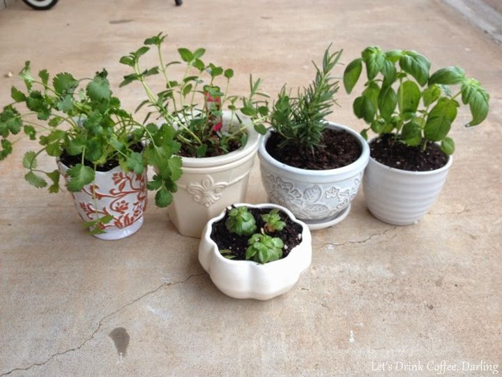 windowsill herb garden, container gardening, gardening, home decor